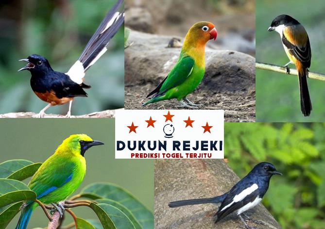 5 Jenis-Jenis Burung Kicau Terpopuler di Indonesia