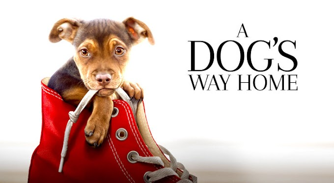 כלב מוצא את הדרך הביתה לצפייה ישירה / A Dog's Way Home