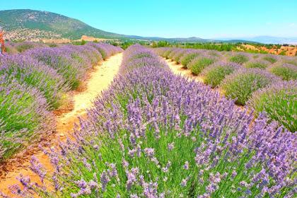 Paket Tour Turki Lavender Festival 29 Juni 2019