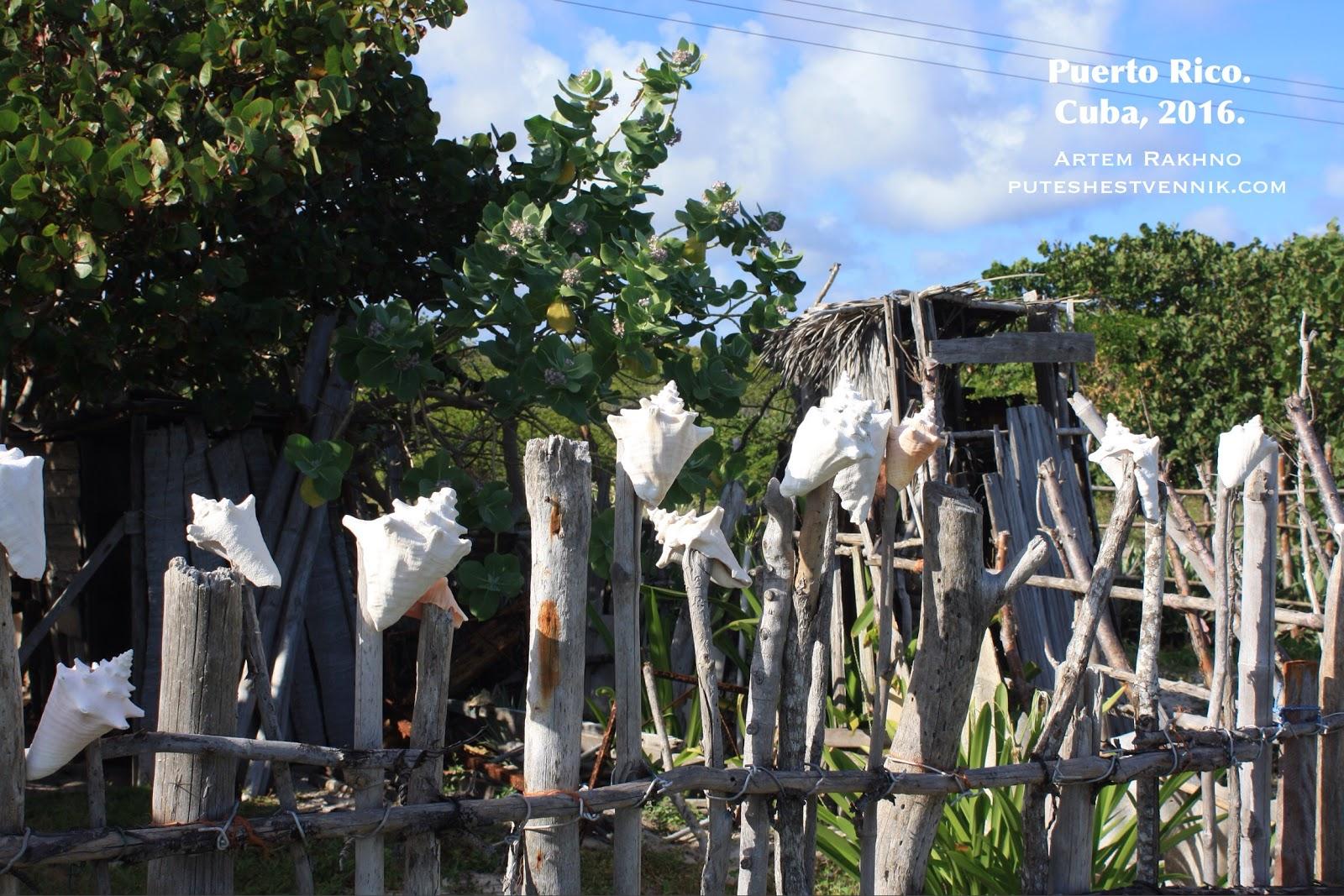 Раковины на заборе в деревне