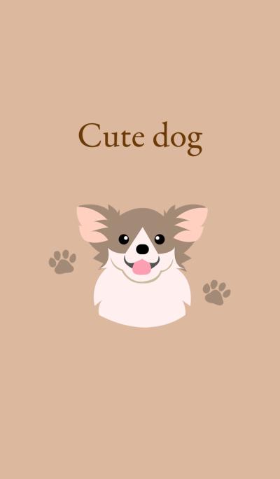 Cute longhair chihuahua dog