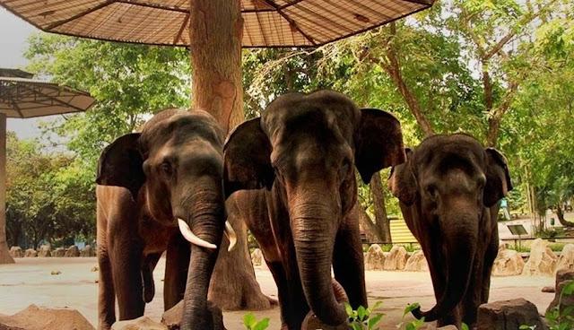 Gajah di Kebun Binatang Ragunan Jakarta
