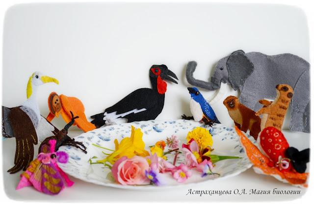 sedobnye-cvety-magiya-biologii