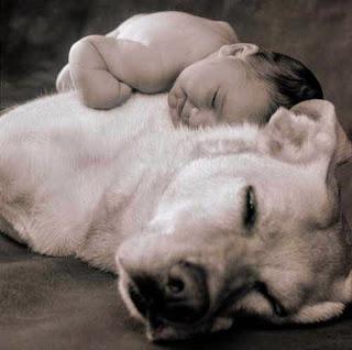Niño durmiendo encima de un perro