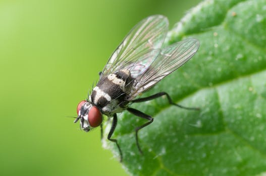 How To Naturally Repel Flies At Home