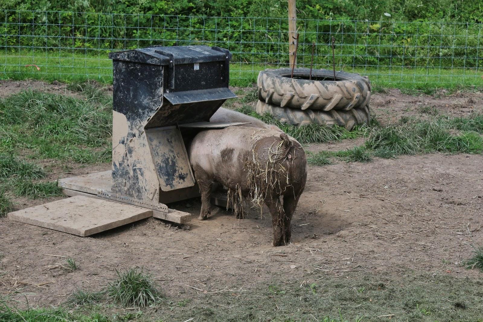 A dissertation upon roast pig elia