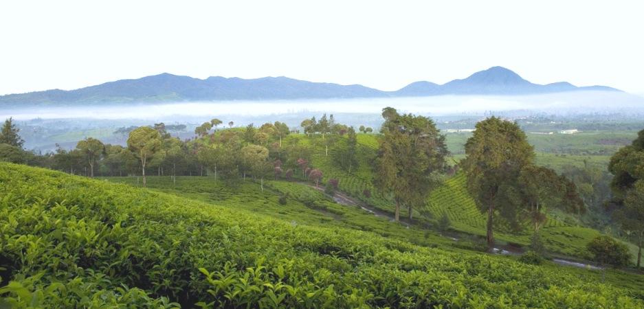 Indonesia west java kediri - 2 8