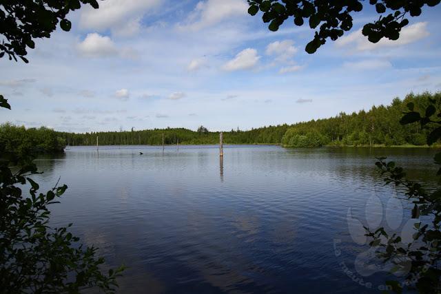 Suede-Scanie-fulltofta-naturcentrum-lac-store-damm