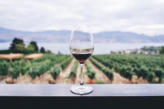 Vinos de Ibiza, conoce sus bodegas