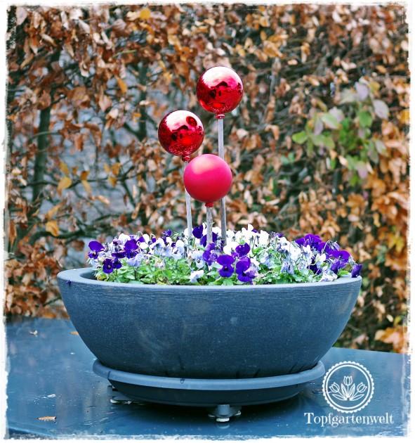 Gartenblog Topfgartenwelt festliche Weihnachtsdekoration in Rot und Weiß + Rezept Flammkuchen: Blumenschale mit roten Kugeln