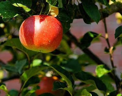 L'interprétation des rêves en Islam sur les pommes