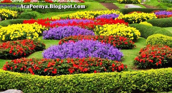 Bunga Membawa Energy Positip