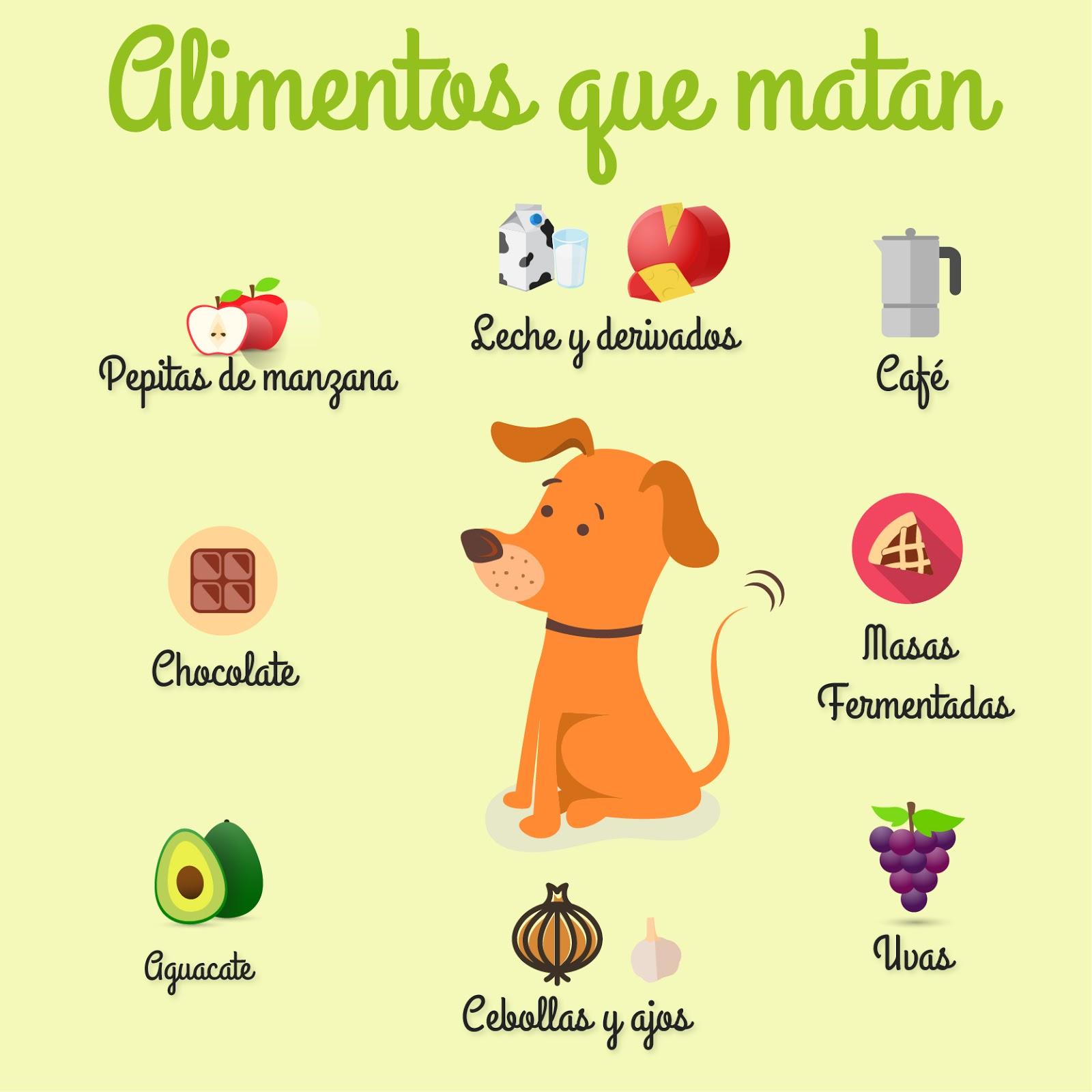 alimentos-perro.jpg