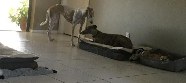 Joan's dogs