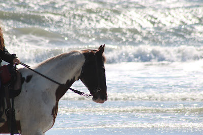 February 27, 2018 Watching horses on the beach.