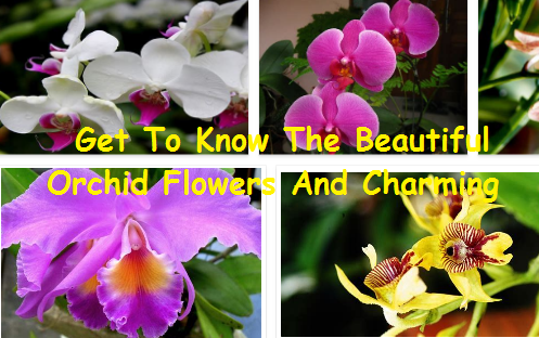 Beautiful Orchid Flowers And Charming