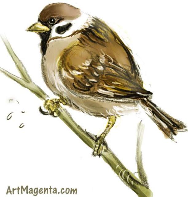 Tree Sparrow sketch painting. Bird art drawing by illustrator Artmagenta.