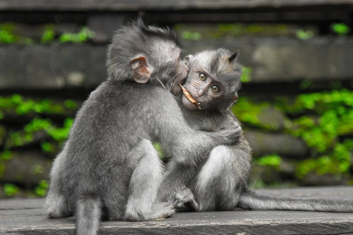 20 Adorable Pictures Prove That Animals Need Love As Much As We Do
