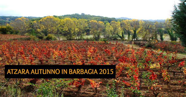 FOTO AUTUNNO IN BARBAGIA AD ATZARA