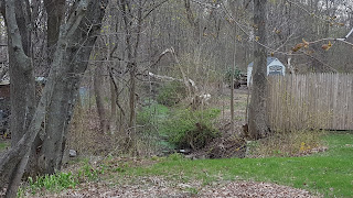 a view of the 'intermittent drainage ditch' or stream from Peck St.