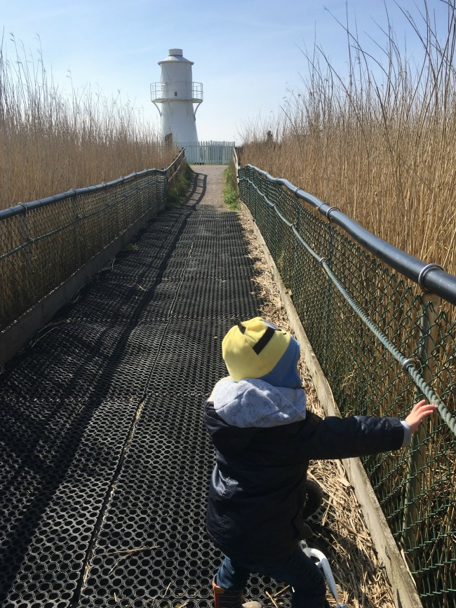 #MySundayPhoto-number-18-toddler-on-bike-with-lighthouse-and-reeds