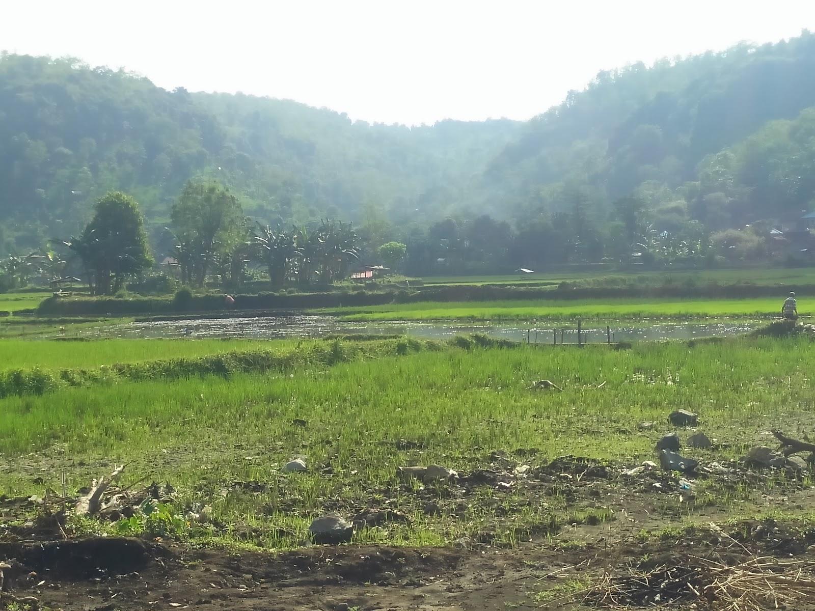 Kementerian Pertanian Ri Bagi 104 Ton Bibit Gratis Media Garda