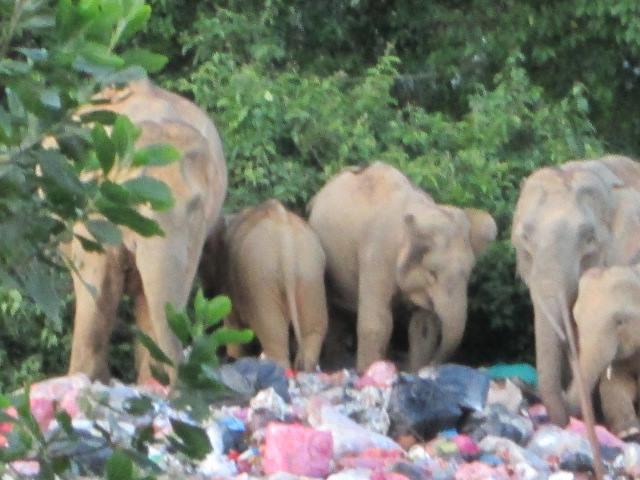 Buang Sampah kalau Nak Tengok Gajah