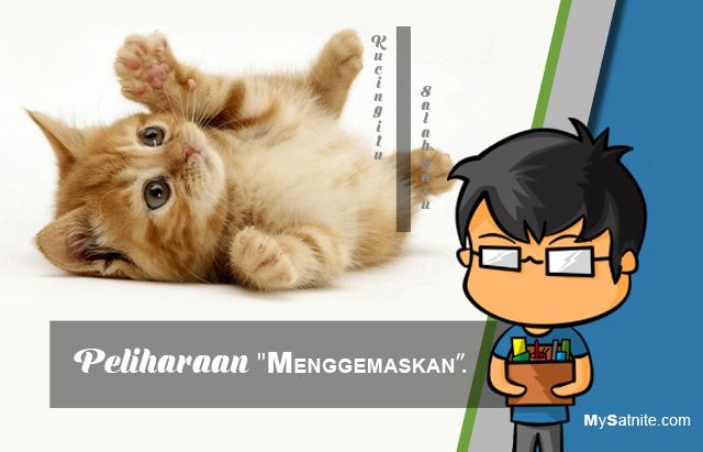 Belajar Dari Kucing Untuk Membuat Sebuah Konten