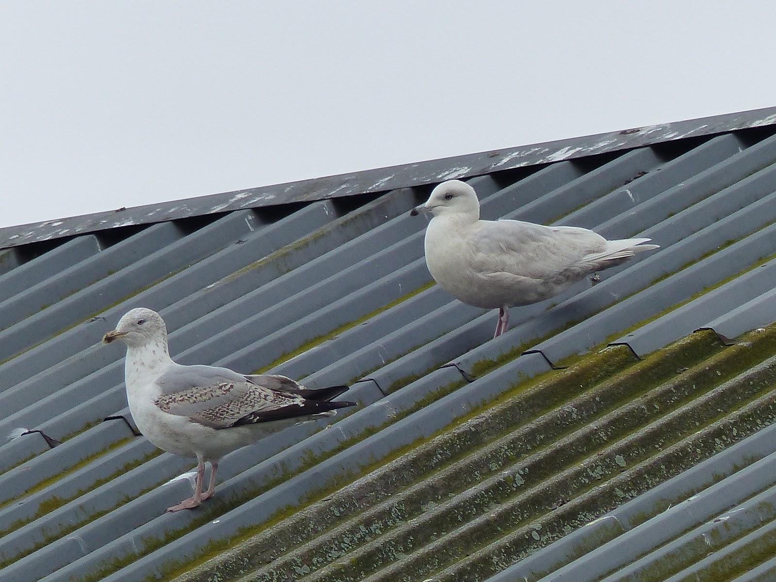 Sheffield bird study group