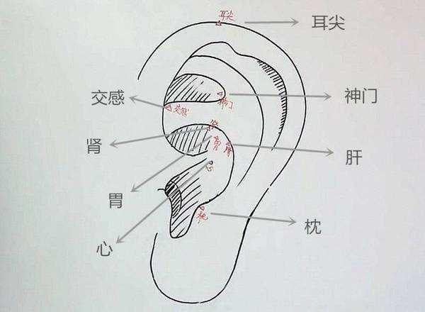 老中醫教你從耳朵了解身體疾病記住哦!(高血壓、心髒病)