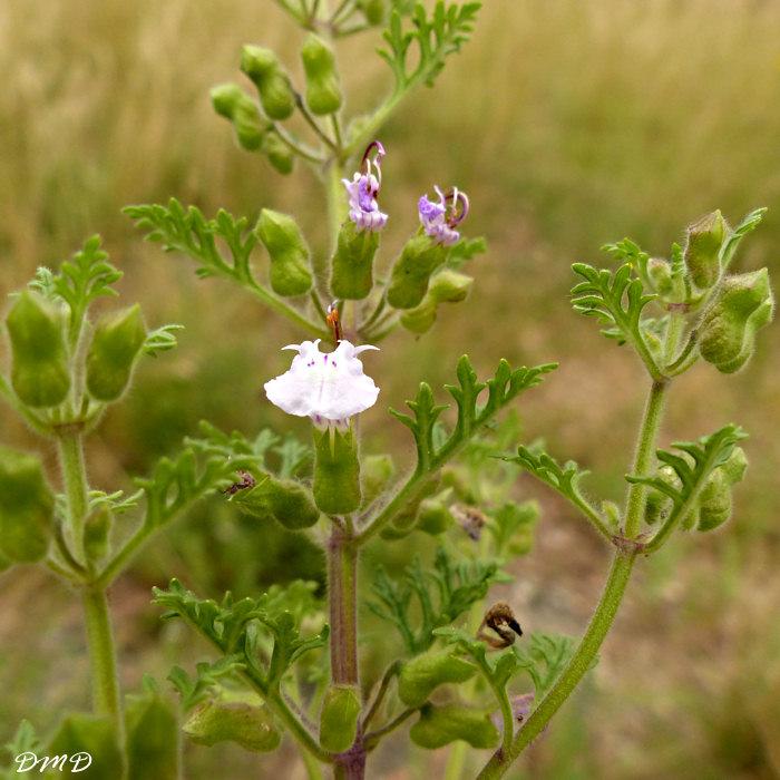 plante grasse a rameaux epineux synonyme