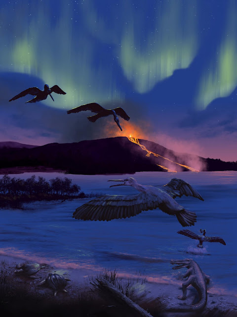 New prehistoric bird species discovered