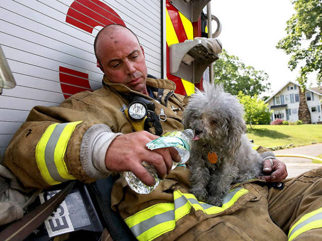 Firefighters-Risk-Their-Lives-To-Rescue-Animals