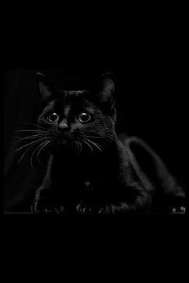 gatos-negros-dichos-sabios