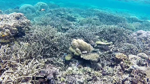 coral snorkeling el nido palawan philippines