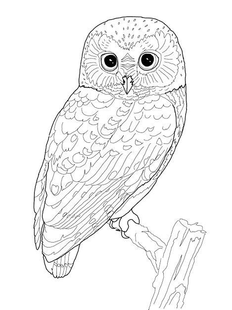 These Are Some Owl Coloring Pages For You And Your Kids To Enjoy Throughout Owl  Coloring