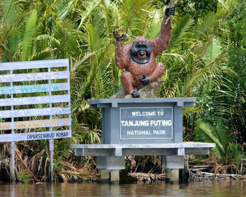 Tinuku.com Travel Tanjung Puting National Park ship cruises watch Borneon orangutans and proboscis monkeys live in wild