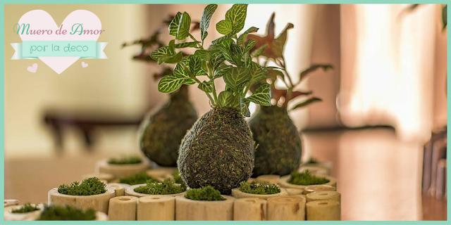 Plantas naturales sin maceta de VERDEARTE-By Ana Oval-12