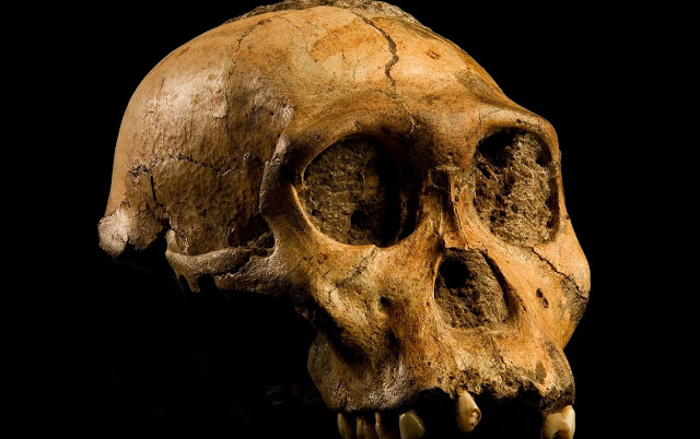 Genetic error led humans to evolve bigger, but more vulnerable, brains