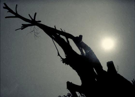 Pohon Angker Jakarta by Charlie Hartono