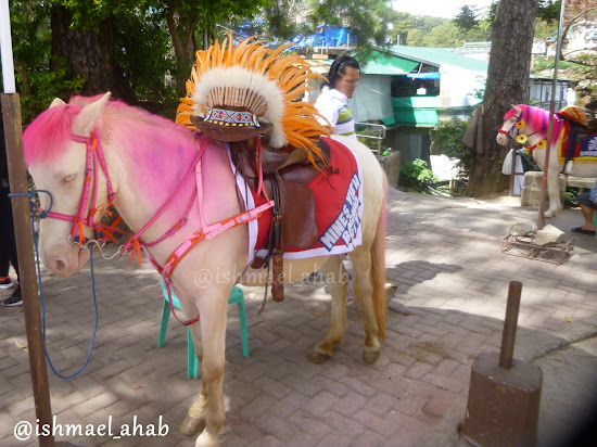 Fancy horse in Mines View Park of Baguio City