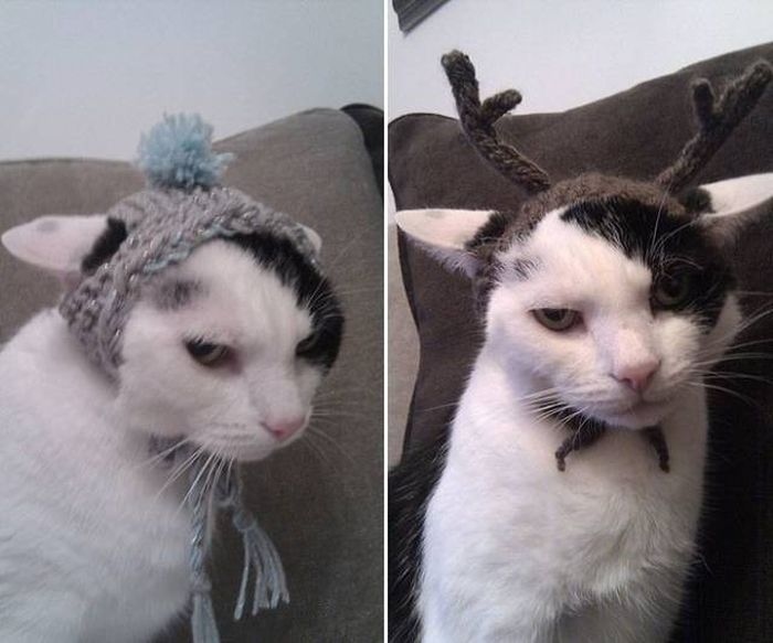 Funny cats - part 258, funny cat images, cute cat picture