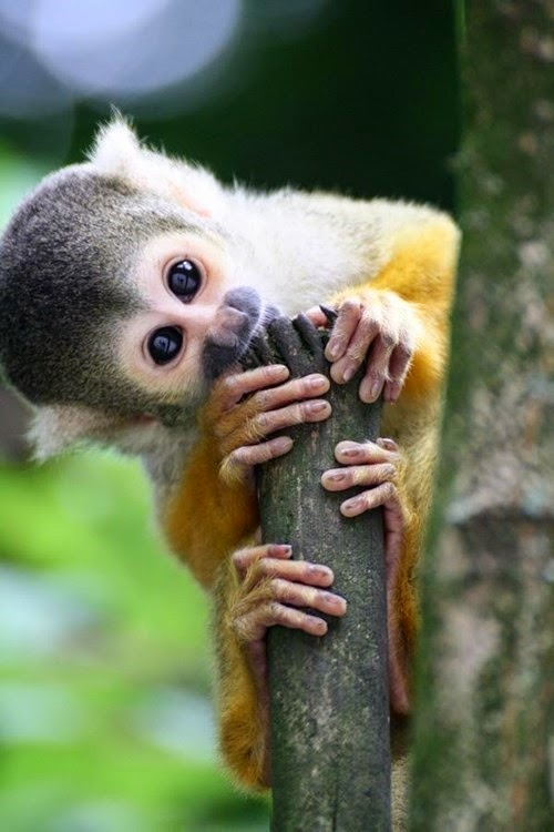 All About Women S Things Top 5 Cute And Cuddly Exotic Pets