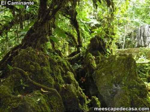Naturaleza en el Centro Turístico Naciente del Río Tioyacu (Rioja, Perú) 1