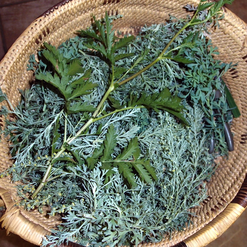 eight acres: herbs- Rue, tansy and wormwood