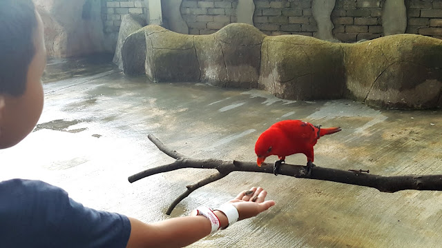 Burung Kakak Tua di Bukit Gambang Safari Park