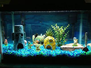 cara-membersihkan-akuarium.jpg