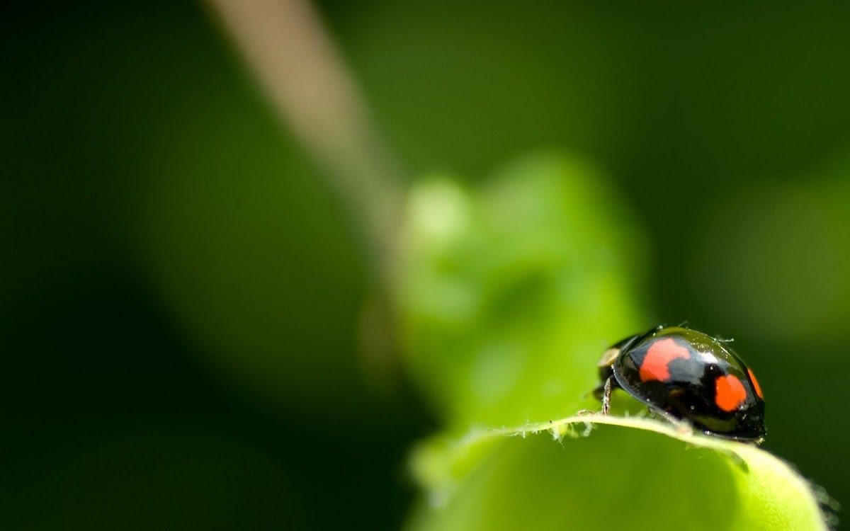 ant macro photography wallpaper - photo #32