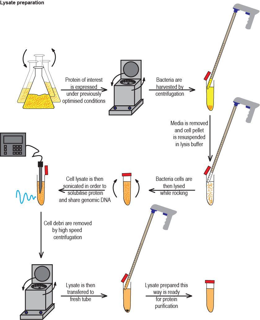 BioFreaks Biochemistry Blog (v.Beta
