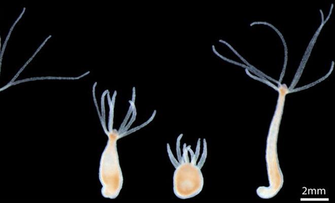 Laporan Penelitian Bakteri Adalah Mesin Penggiling Makanan Dalam Usus